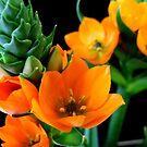 Flower Power by Faith Donovan