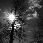 Dead Tree by ErinCrossman