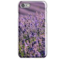 English Lavender in the Summer Sun iPhone Case/Skin