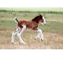 Fast foal Photographic Print