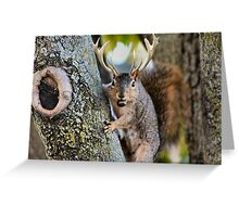 Budget Jack a lope Greeting Card