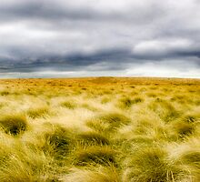 Grasses  by James  Archibald