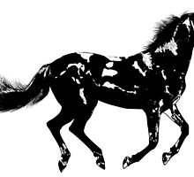 Black Horse by givemefive