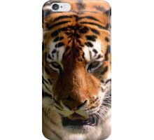 Portrait of the Striped Royal Bengal Tiger of India iPhone Case/Skin