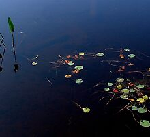 Pickerel Weeds and Lillies by Wayne King