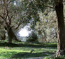 Olive Grove Card by emele