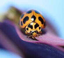 Yellow ladybug by Rick Fin