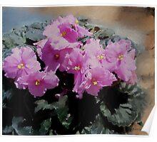 African Violet, pink flowers, impressionism, floral art Poster