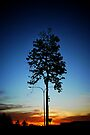Tree Sunset by Richard Owen