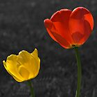 Yellow and Red Tulips by BigD
