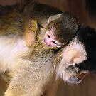 Squirrel Monkey and Baby by Sheila Smith