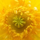 INside the Sun by NancyC