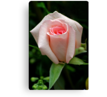 for the LADIES Canvas Print