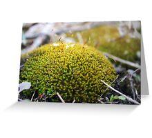 In This Spore Borne Air, Greeting Card