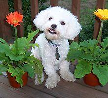 Georgie loves flowers by Darlene Virgin