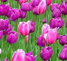 Spring Tulips by Mary Kaderabek-Aleckson