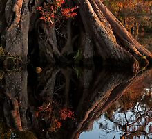 Grotto in the swamp by Bruce Bischoff