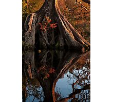 Grotto in the swamp Photographic Print