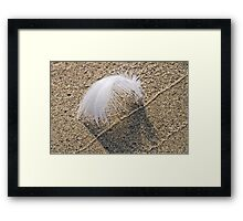 Seagull Feather Framed Print
