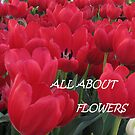 All About Flowers by Gloria Abbey