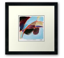 house of imports Framed Print