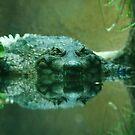 Mr. Croc by Anne-Marie Bokslag