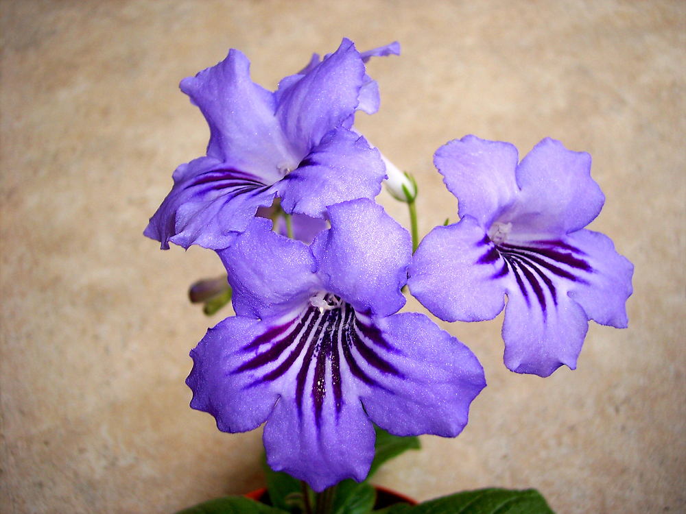 Purple Petal Plant by Braedene