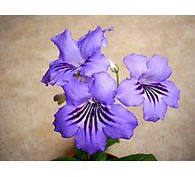 Purple Petal Plant Photographic Print