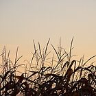 No. 1  Farm Country Sunrise by MichiganGirl