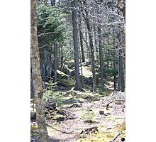 Grayson Highlands Trail Photographic Print