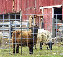 No. 2 Sheep on the Farm by MichiganGirl