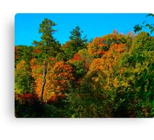Autumn Roar Canvas Print