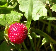 wild strawberry  by Linda Jones