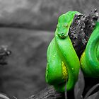 The Green Snake by Michael Walker