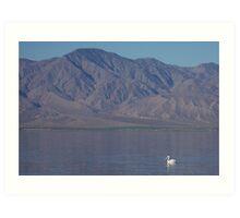 American White Pelican (Salton Sea) Art Print