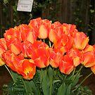 """""""Orange Tulips"""" by Lynn Bawden"""