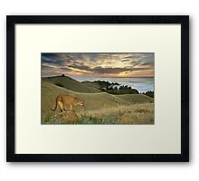 1177-Misty Cougar Sunset Framed Print