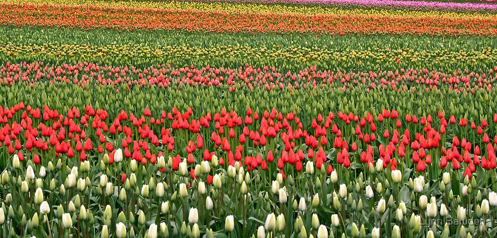"""""""Rows Of Color"""" by Lynn Bawden"""