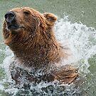Bathing Bear by Bonnie T.  Barry