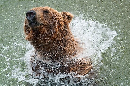 Bathing Bear by Bonnie T.  Barry