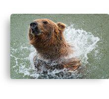 Bathing Bear Canvas Print