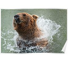 Bathing Bear Poster