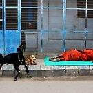 Sleeping sadu and goats by jihyelee