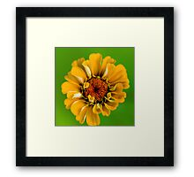 Sun in a dreary world.  Framed Print
