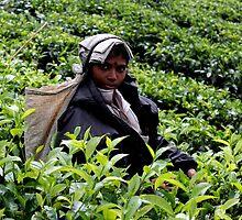 Women working in the tea fields by jihyelee