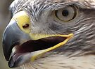 Ferruginous Hawk ~ Extreme Close-Up by Kimberly Chadwick