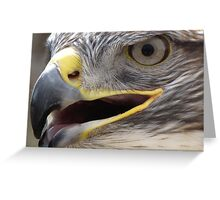 Ferruginous Hawk ~ Extreme Close-Up Greeting Card