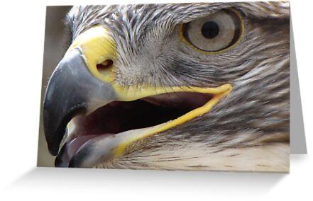 Ferruginous Hawk ~ Extreme Close-Up by Kimberly Chadwick
