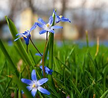 Spring Flowers by Chad Ely