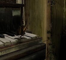 Butterfly on the Piano by Jblaxland
